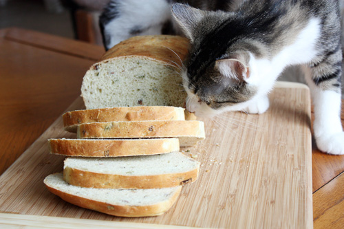 cat sniffing loaf of bread on table