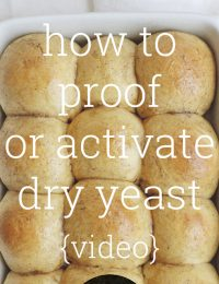 how to proof or activate dry yeast